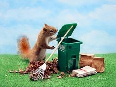 This image has an empty alt attribute; its file name is littersquirrel.jpg